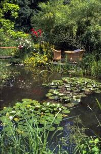 Foto: BGL. - Zu den schönsten und auffälligsten Gewächsen für einen Teich gehören die Seerosen (Nymphaea).
