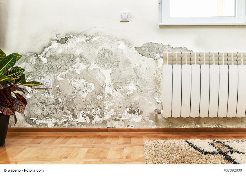 Schaden durch Feuchtigkeit an der Wand © wabeno / Fotolia.com