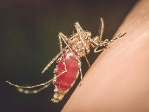 Mit den richtigen Hilfsmittel kann man sich vor lästigen Insekten schützen Foto: © PongMoji / Shutterstock