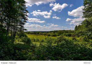 """Naturschutzgebiet """"Lange Dammwiesen und Unteres Annatal"""" Foto: (c) ebenart - fotolia.com"""