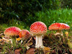 Was kann man tun, wenn beim Nachbarn die Anbauten wie Pilze aus dem Boden schießen? 557453 / Pixabay