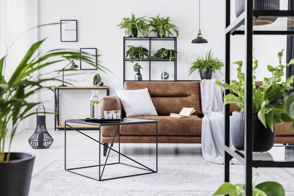 Urban Jungle in einem modernen Wohnraum