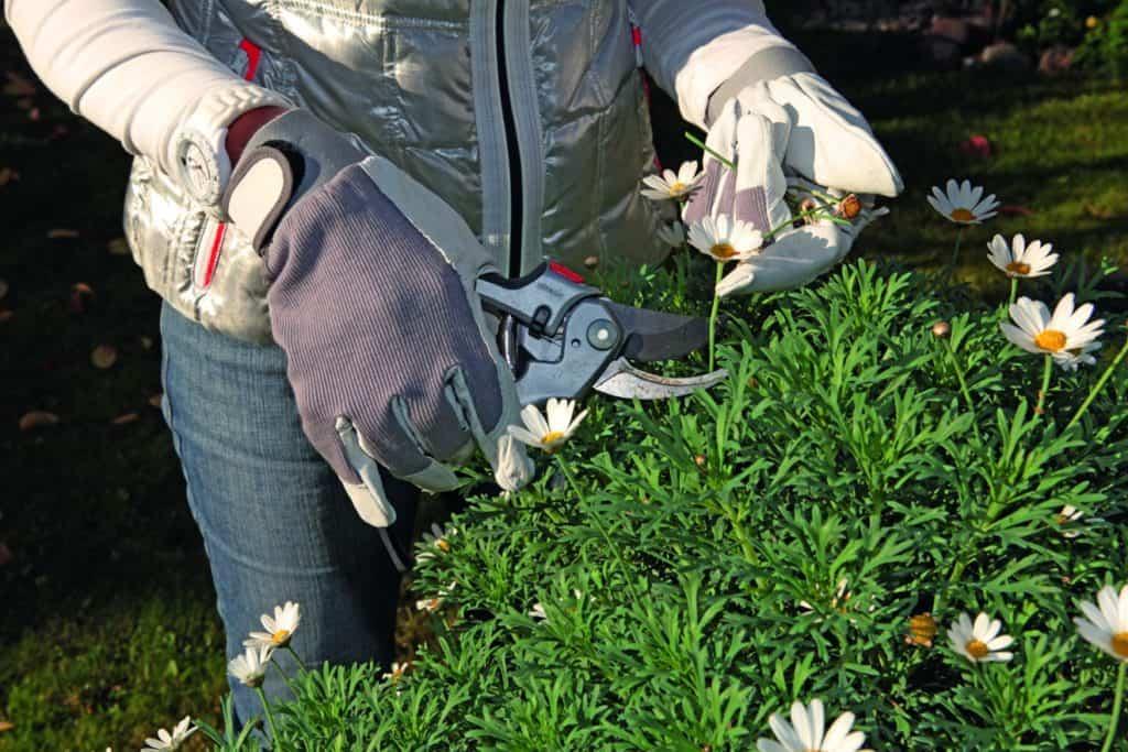 Das Beschneiden gehört zu den typischen Gartenarbeiten