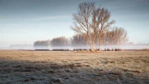 Baum auf einem gefrorenem Feld im Landkreis Telow-Fläming