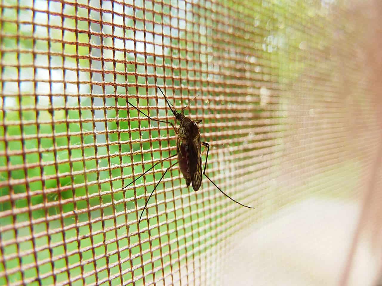 Schutz vor Insekten