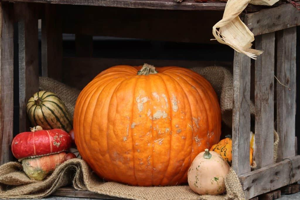 Herbst Deko für die Wohnung