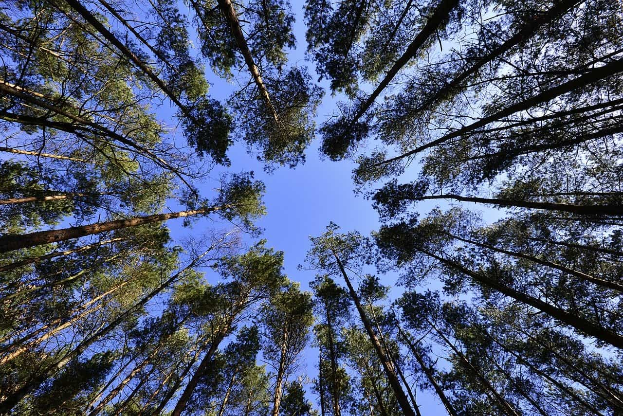 Das Klimapaket der Bundesregierung soll die Umwelt schützen