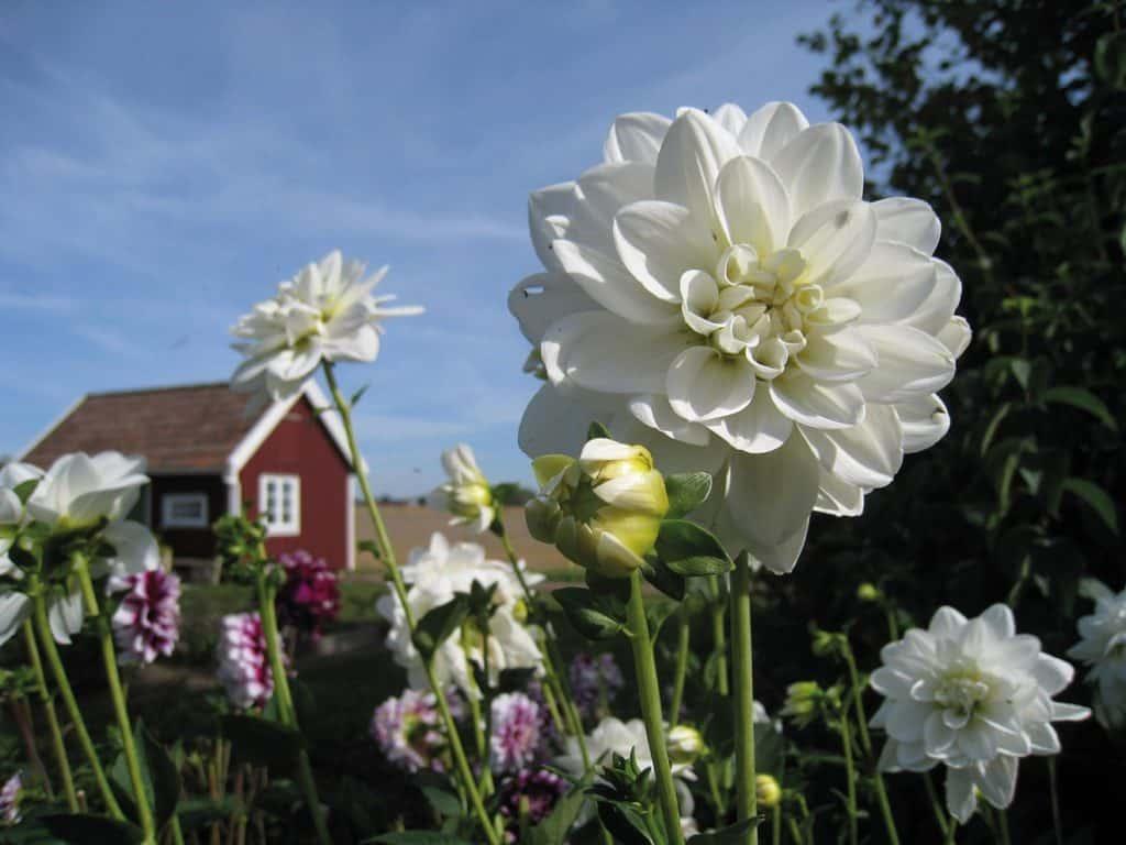 Ferienimmobilien - es muss nicht immer Nord- oder Ostsee sein