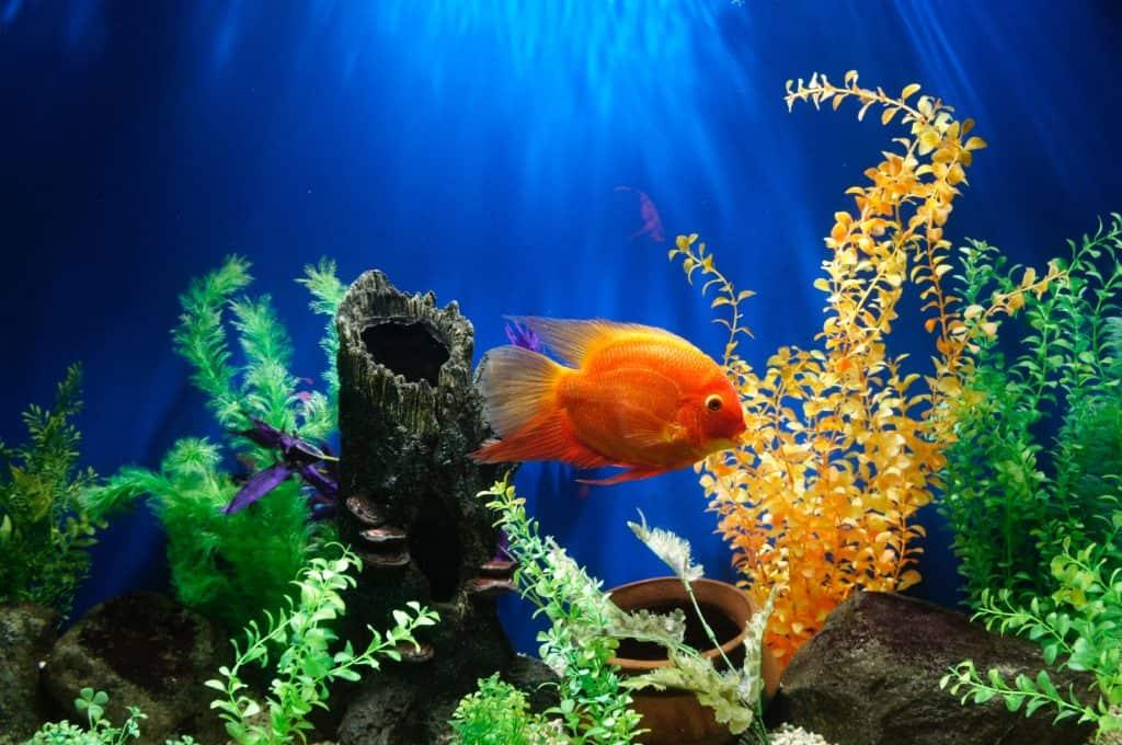 Besondere Gefahrenquellen wie ein Aquarium